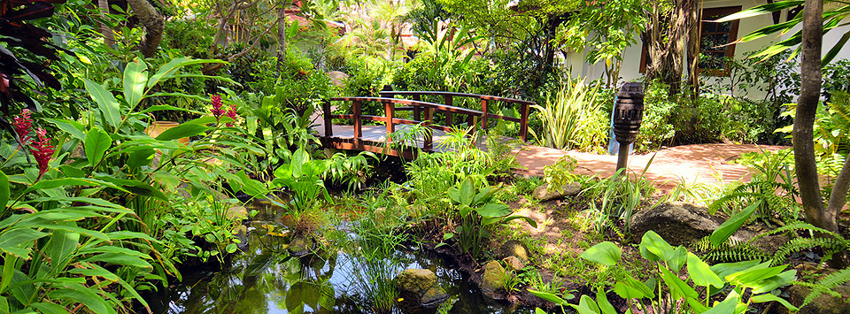 A bridge in the garden at Poppies hotel with a lot of foliage and palm trees